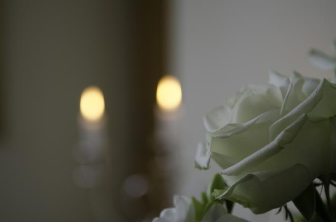 White memorial rose