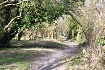 Par course trail