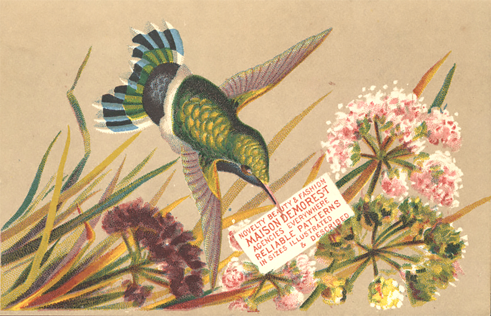 Demorest trade card - By Miami U. Libraries - Digital Collections