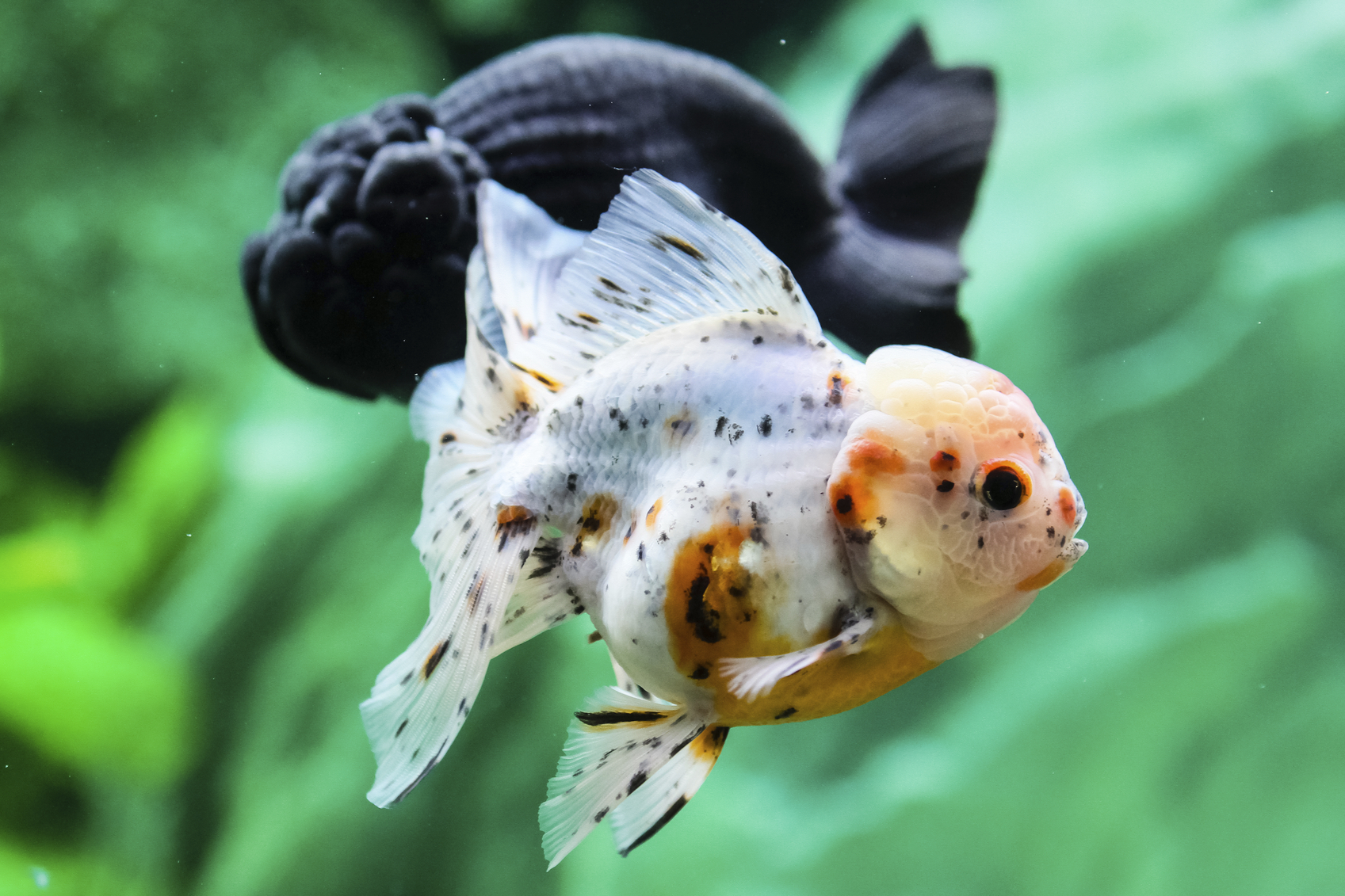 Fish aquarium and good luck - Fish Aquarium And Good Luck