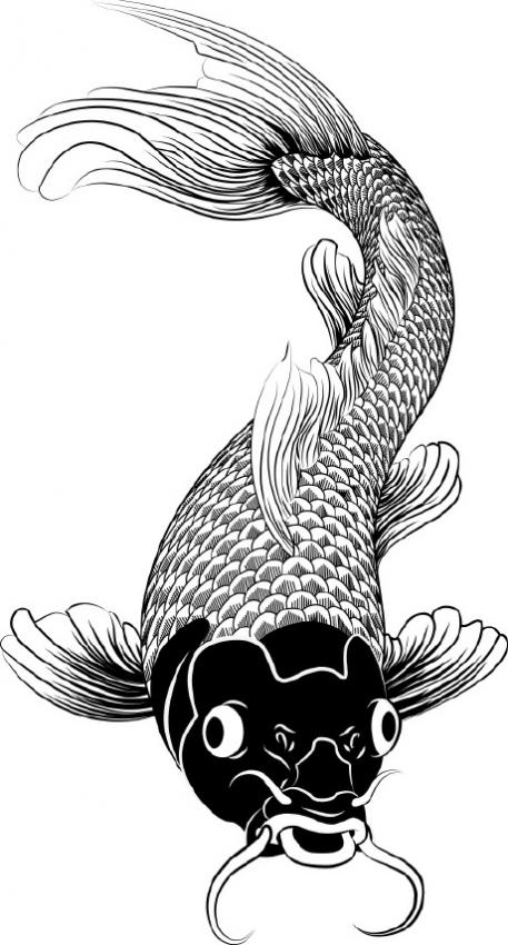 Koi fish drawings slideshow for Japanese koi fish drawing