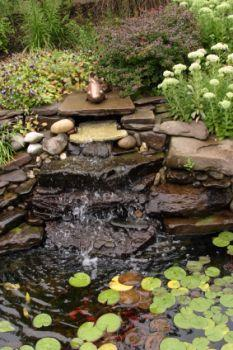 Backyard water feature, waterfall koi pond.