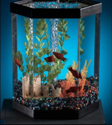feng shui lucky number of fish in a tank. Black Bedroom Furniture Sets. Home Design Ideas