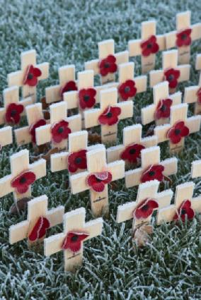 Poppies decorate veteran's graves.