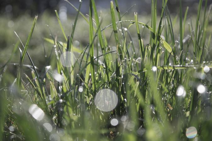 Orbs are seen in a photograph of wet grass.