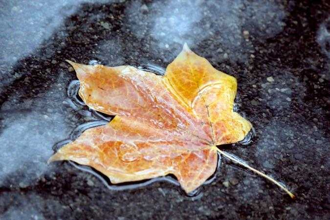 Yellow leaf in water