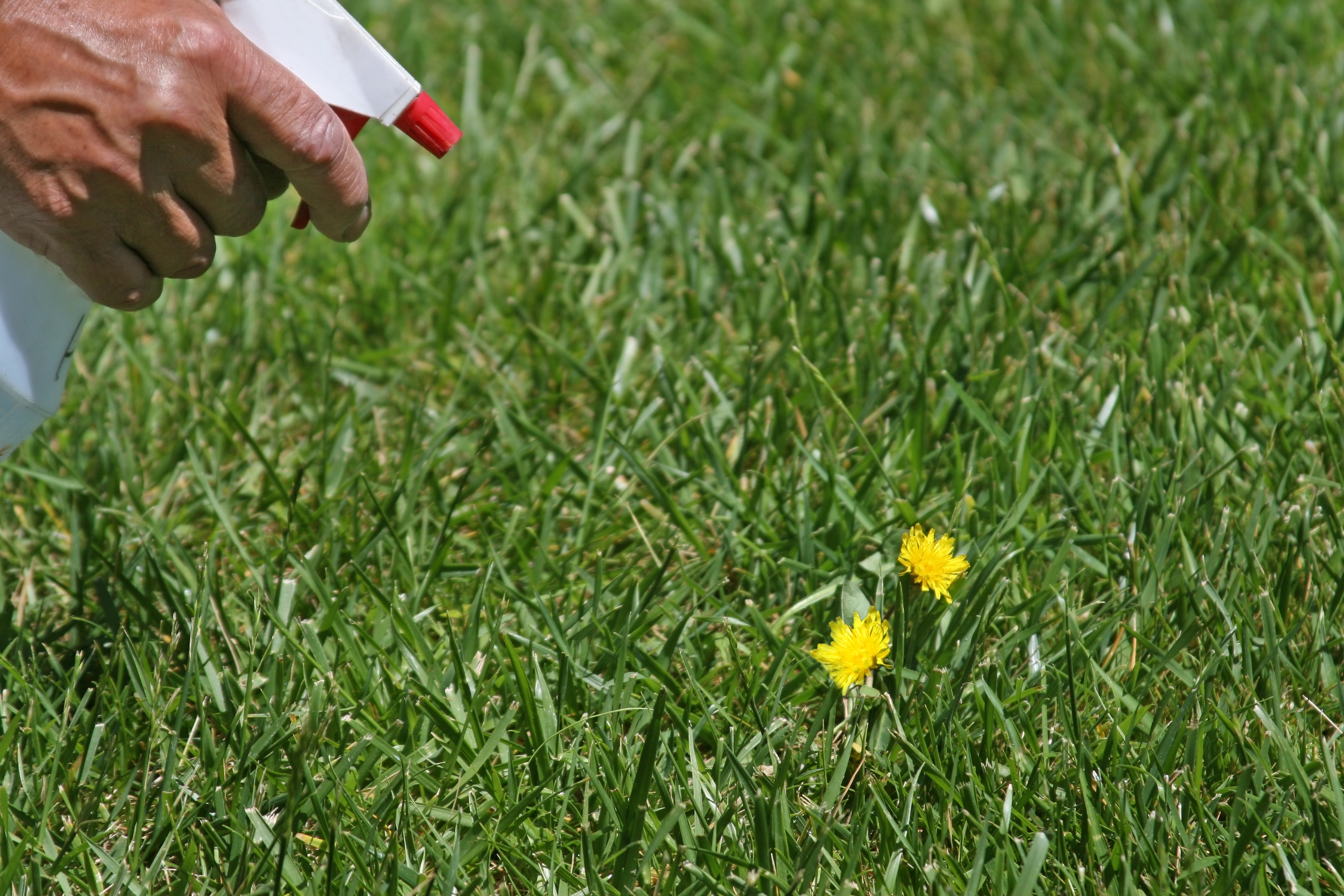 Weeds in flower beds herbicide - Weeds In Flower Beds Herbicide 25