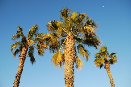 coconut trees quotes