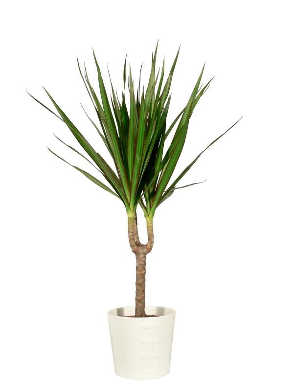 Indoor Plants for Shade | LoveToKnow