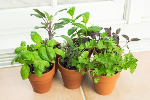 کاشت و پرورش انواع سبزیجات در گلدان
