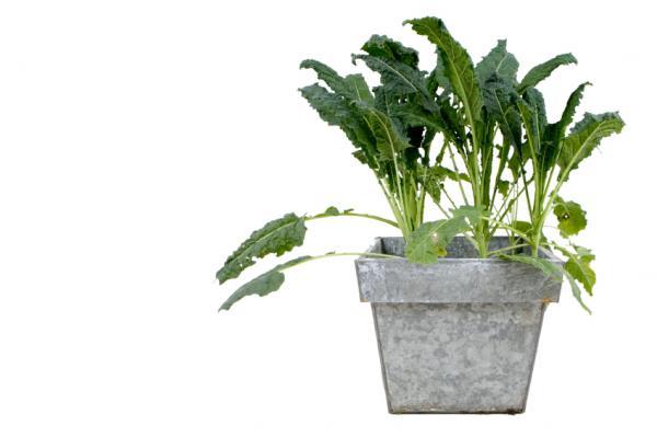 کانال+تلگرام+گیاهان+زینتی