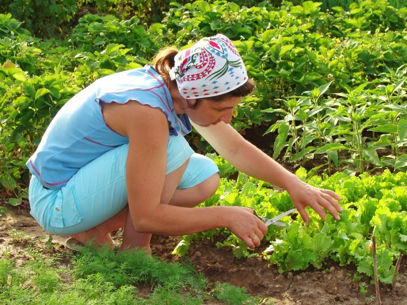 How to grow a vegetable garden slideshow for Garden vegetables to grow
