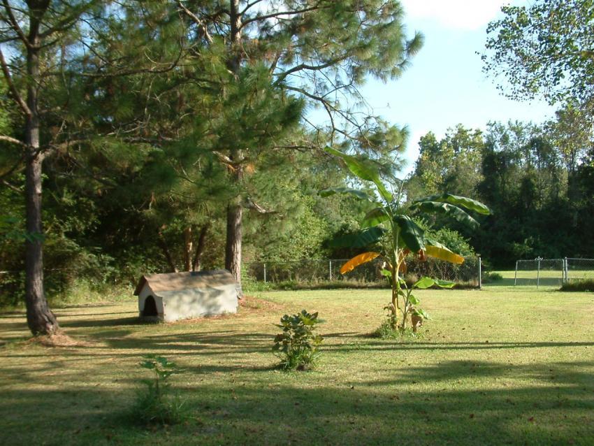 Sunny yard