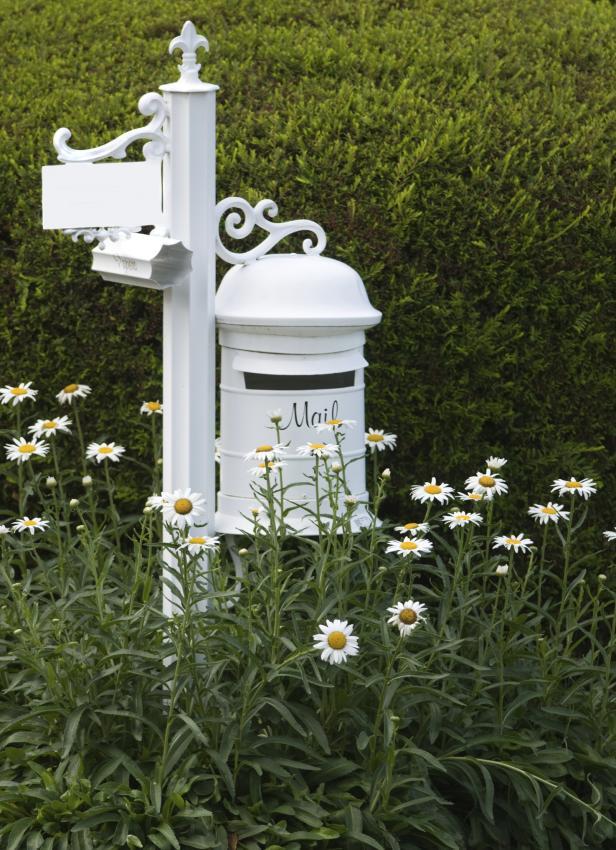 white mailbox with shasta daisies