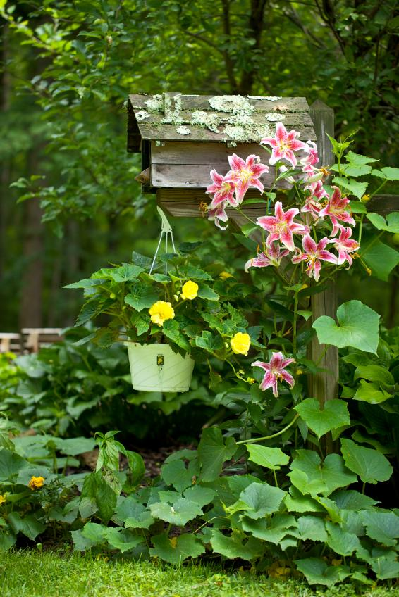 mailbox with flowers and vegetables