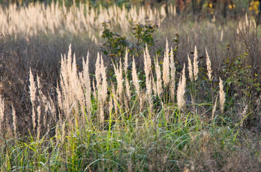 Ornamental grass landscape ideas slideshow for Wild ornamental grasses