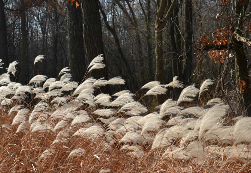 wintertime tufts of grass