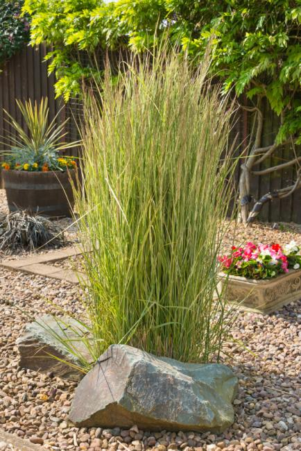 Ornamental grass landscape ideas slideshow for Long grass landscaping