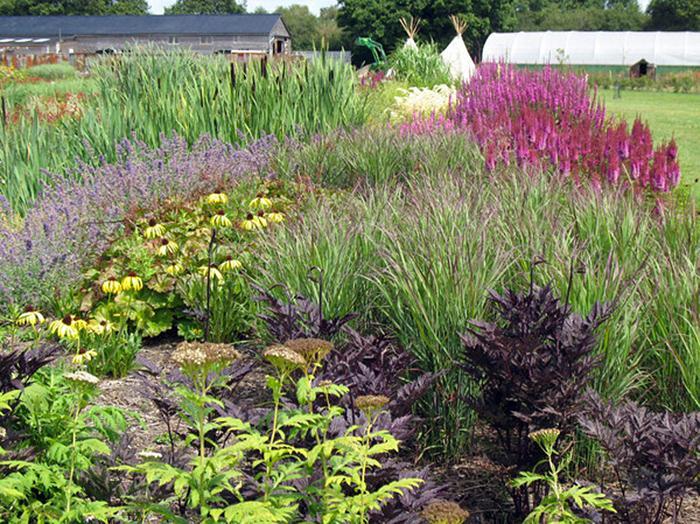 Ornamental grass landscape ideas slideshow for Ornamental grass garden ideas