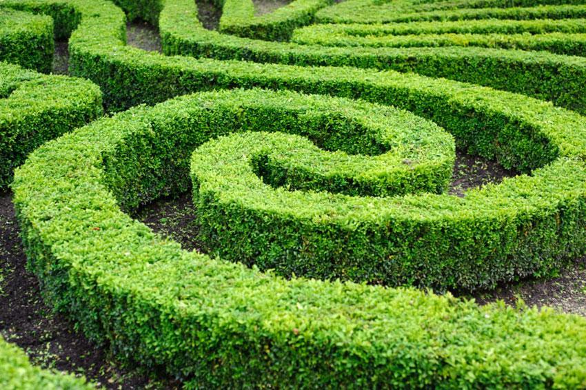 swirling topiary design