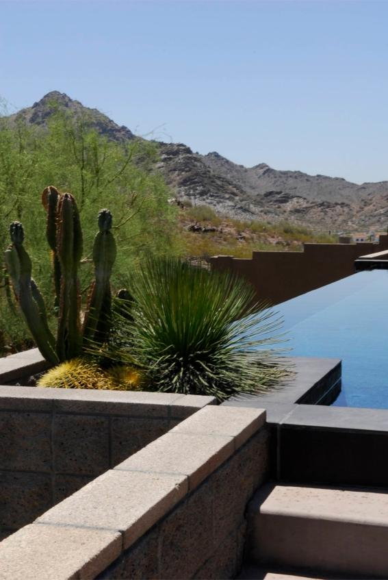 pool with cacti