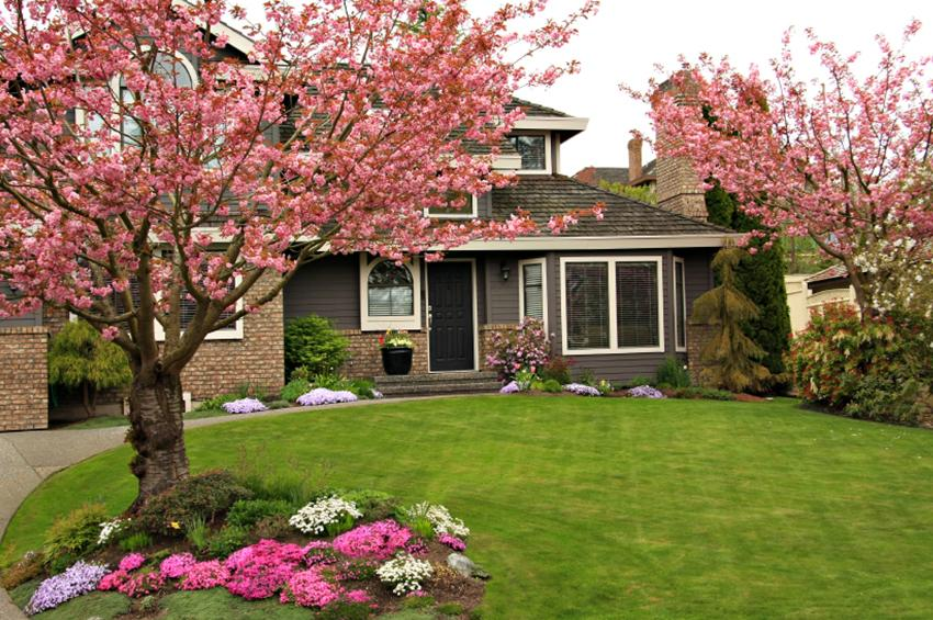 Front yard landscaping pictures slideshow for Plants for landscaping around house