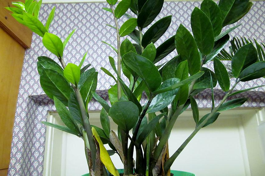 10 Plants You Can T Kill Slideshow