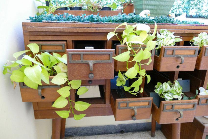 Repurposed desk as planter