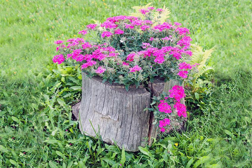 Stump of flowers