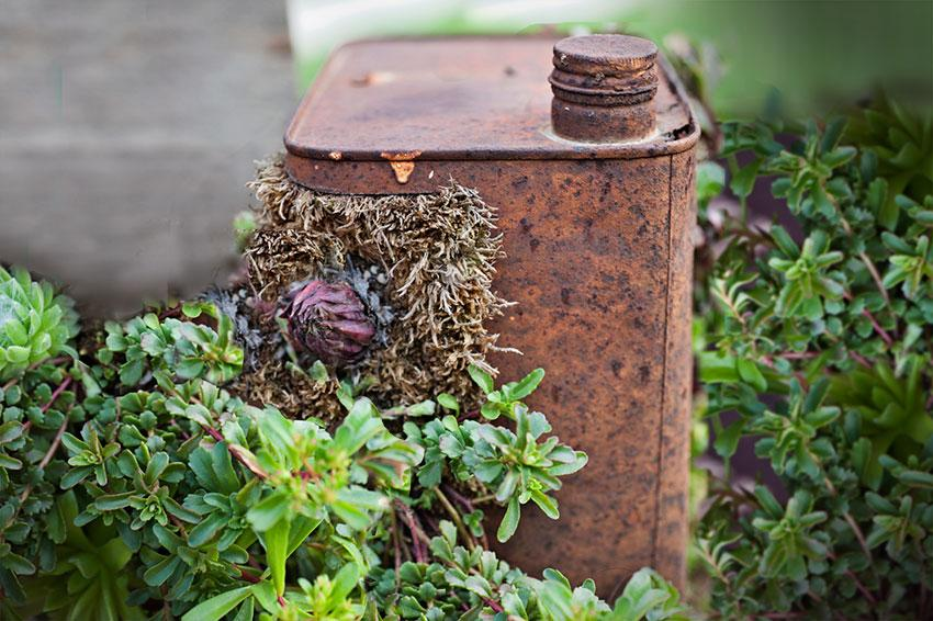 Rusted can planter