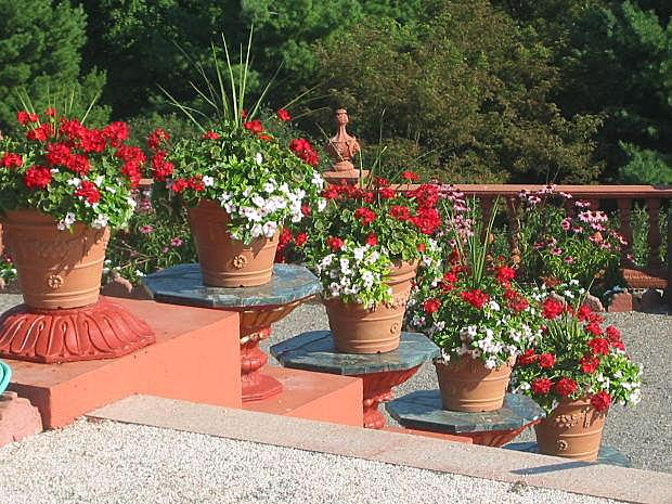 Red flowers in containers