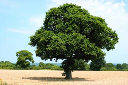 Choosing Trees Trees