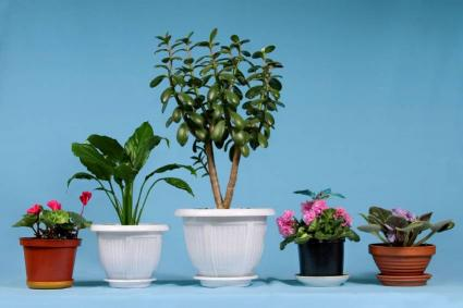 Many plants thrive indoors.
