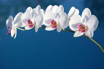 how to take care of a phalaenopsis orchid plant indoors