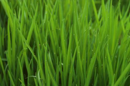 Home Lawn Soil Testing