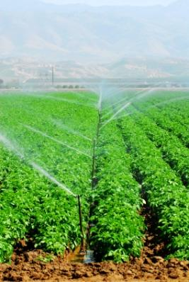 self watering irrigation systems