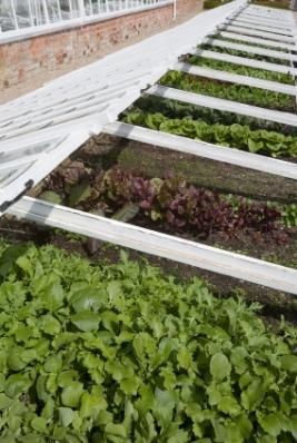 rows of cold frames in england