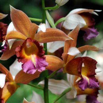 Orchid, rainforest plants, tropical flowers