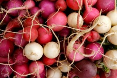 Can Dogs Have Radish