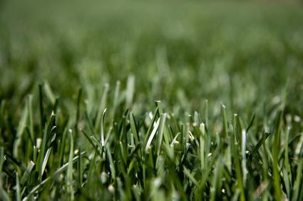 Beautiful green turf.
