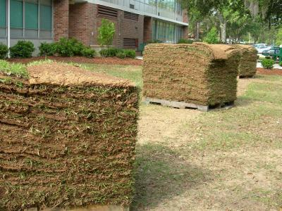 Sod waiting for installation