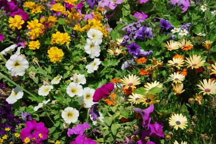 Horticulture and Plant Identification – Garden Plants Identification