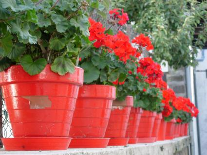 Drought Resistant Plants And Flowers