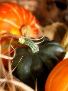 Acorn Squash Growing