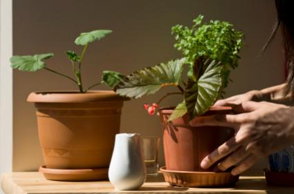 gathering facts for identifying house plants