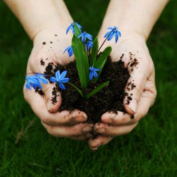hands holding flower and soil
