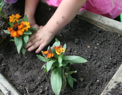 planting flowers in raised bed