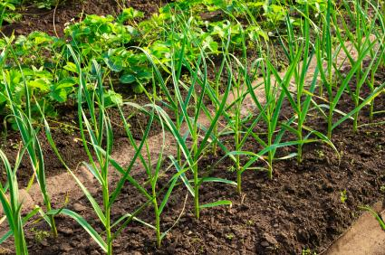 how to tell if your soil has good drainage