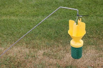 Japanese beetle trap; Copyright Hcirdoog at Dreamstime.com