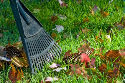 Fall lawn cleanup